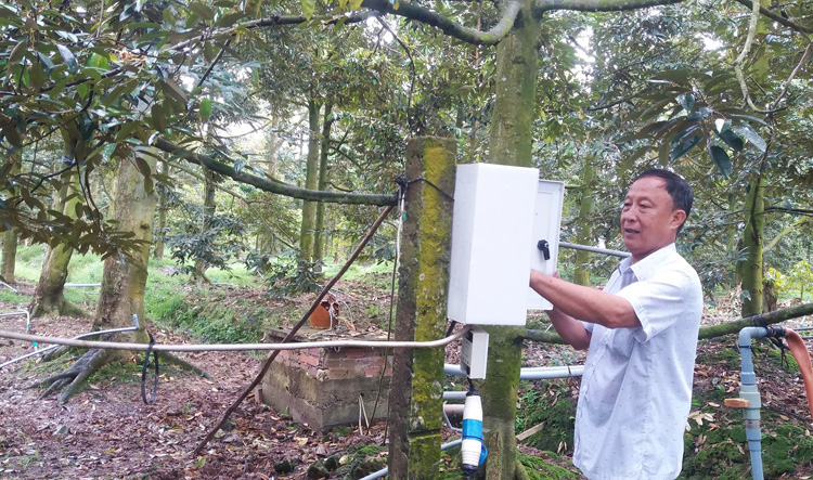 Ông Dương Văn Đây kiểm tra hệ thống phun nước tự động trong vườn sầu riêng.