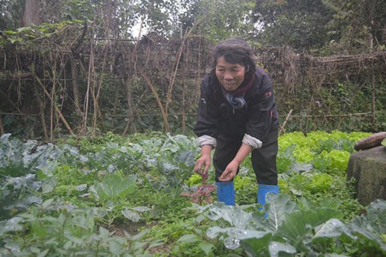 Hai chị em tự trồng rau ăn để đảm bảo sức khỏe.