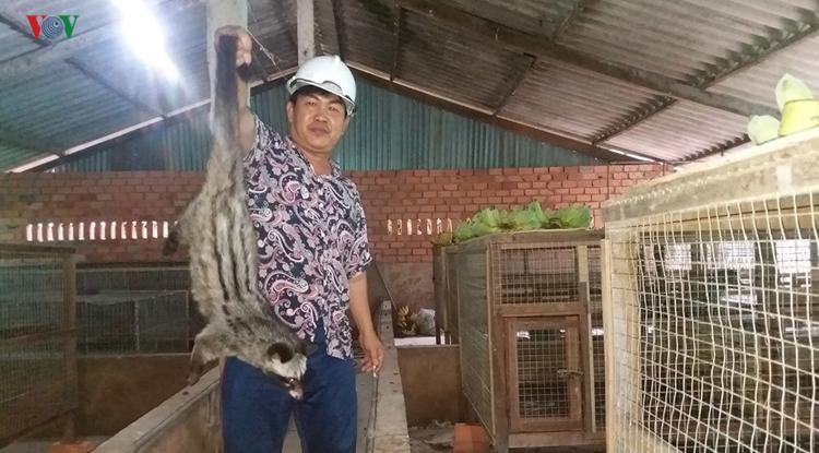 Ông Võ Văn Tiến ở ấp Xóm Đình, xã Kiểng Phước, huyện Gò Công Đông, Tiền Giang làm giàu nhờ mô hình nuôi chồn hương.