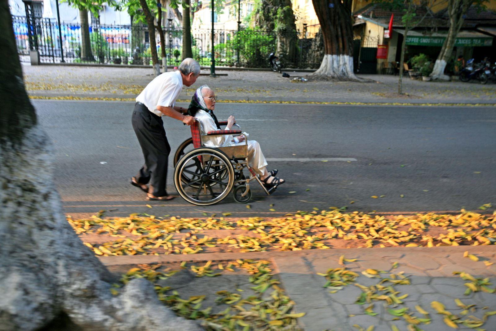 Trên các phố Phan Đình Phùng, Trần Phú, Điện Biên Phủ, Lý Nam Đế..., lá sấu rụng bên những gốc sấu già là một trong những hình ảnh đẹp, đặc trưng rất ...Hà Nội.