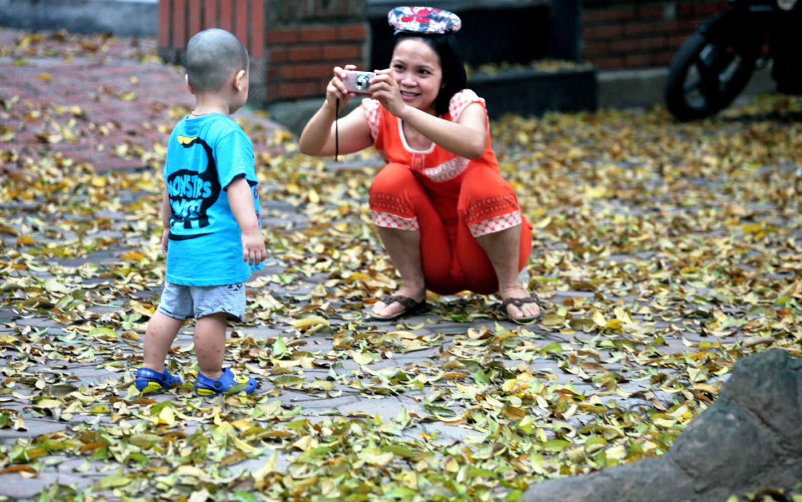 Lá sấu rụng làm cho nhiều con đường Hà Nội trở nên lãng mạn.