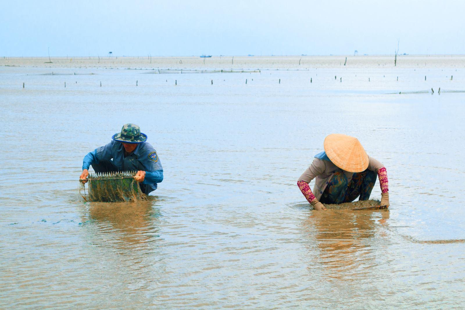 Dụng cụ cào nghêu non là một tay lưới có gắn thêm lưỡi cào, người ta phải ấn lưỡi cào xuống đất và kéo đi cho nghêu nổi lên rồi hốt vào lưới.