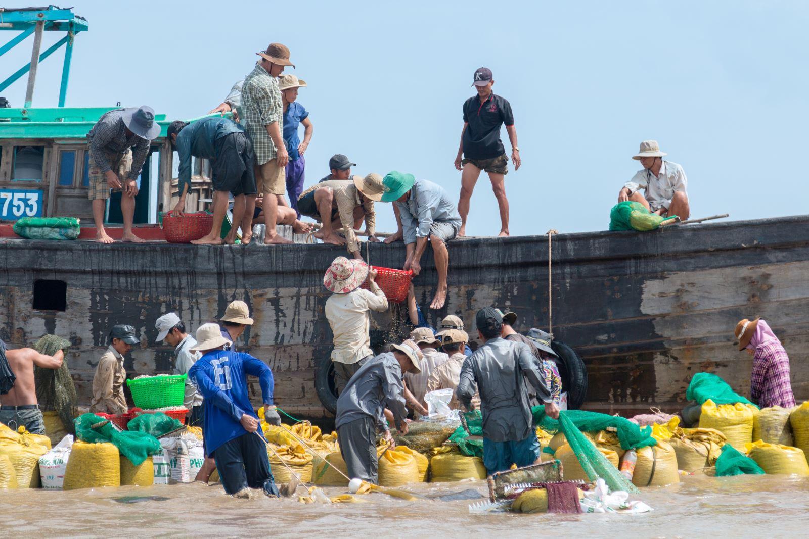 Nghêu non được tập kết lên thuyền để mang qua bãi nuôi khác.
