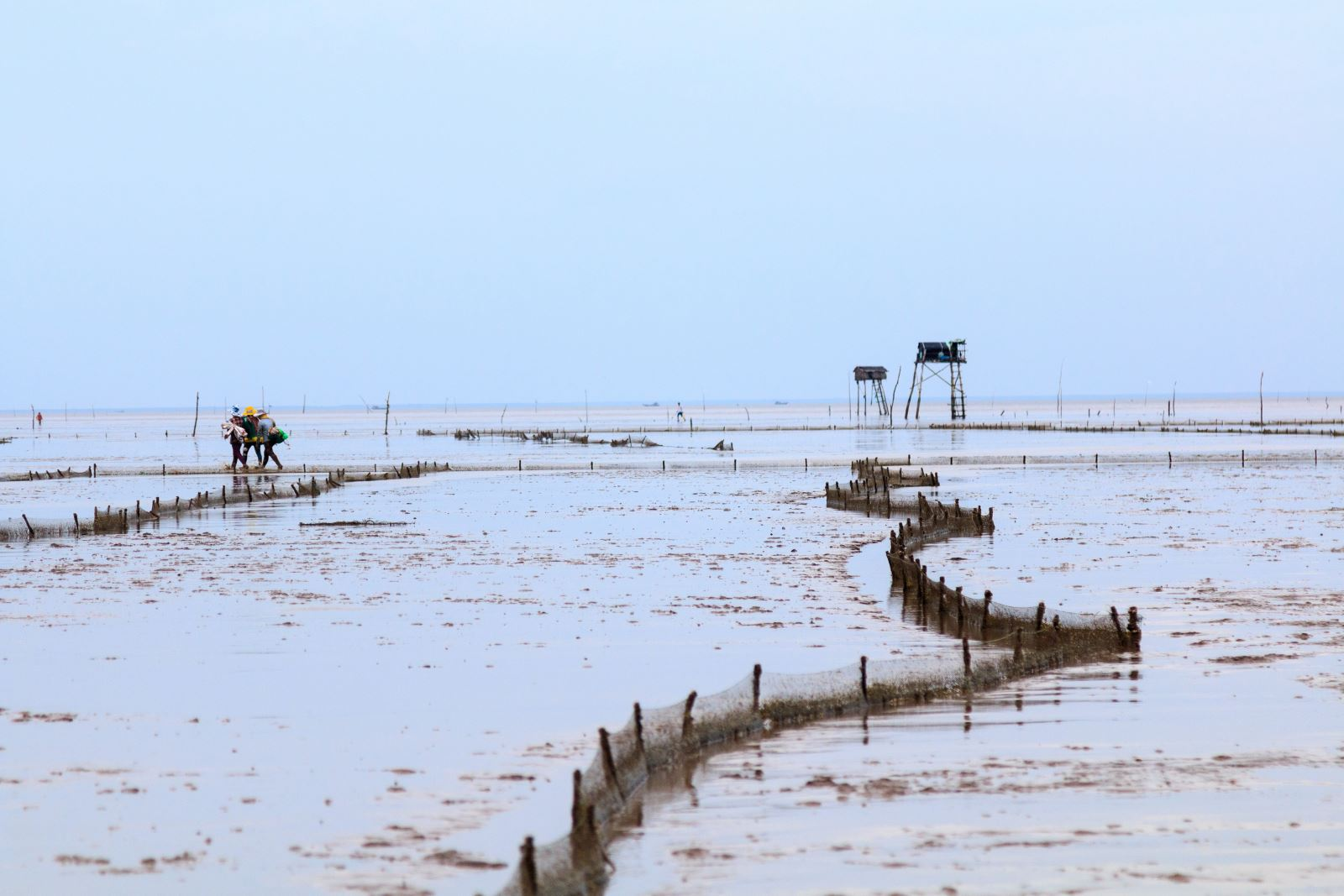 Những hàng rào lưới phân lô nuôi nghêu trên bãi biển.