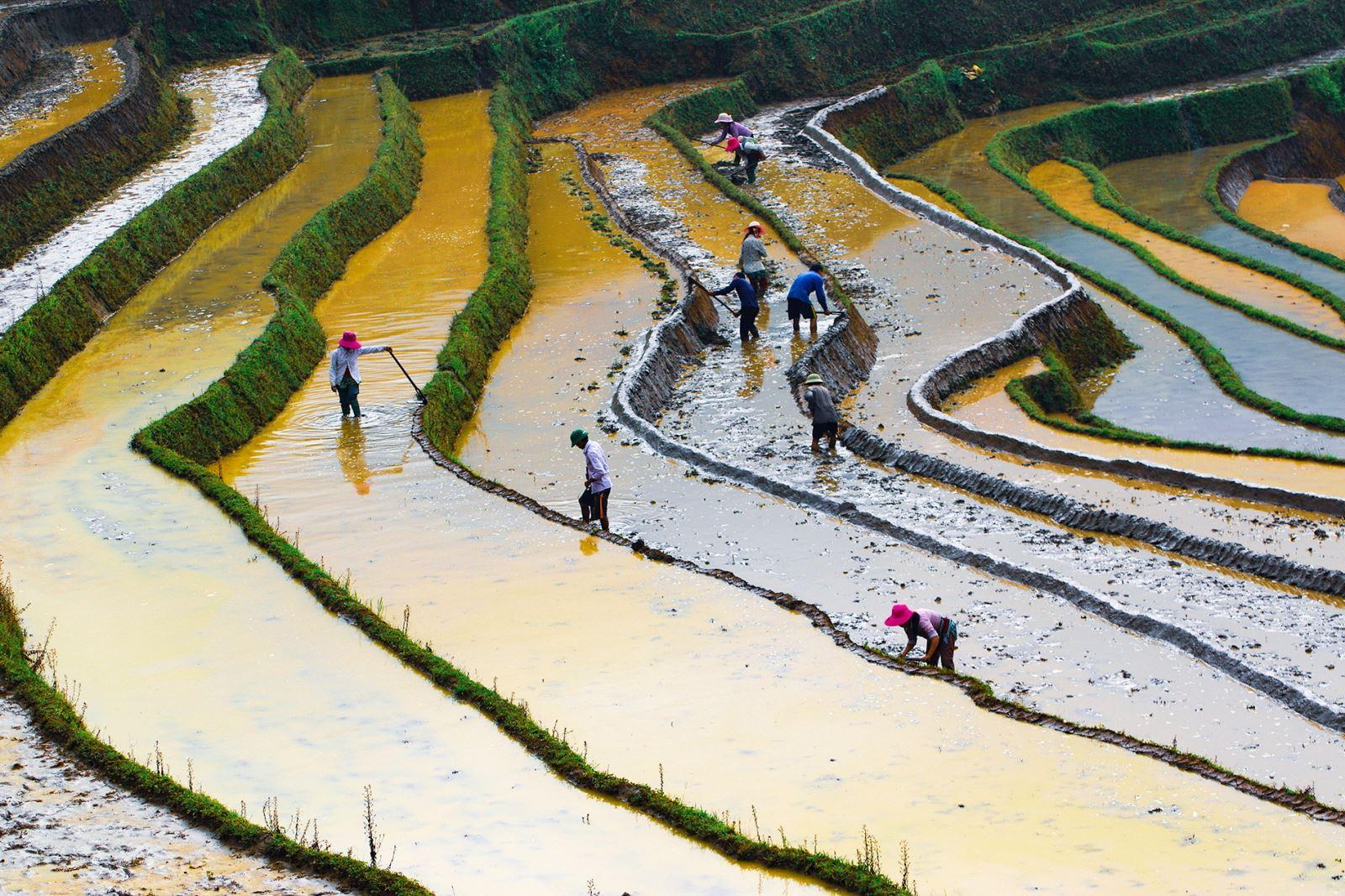 Làm ruộng ở Sàng Ma Sáo(huyện Bát Xát - Lào Cai)