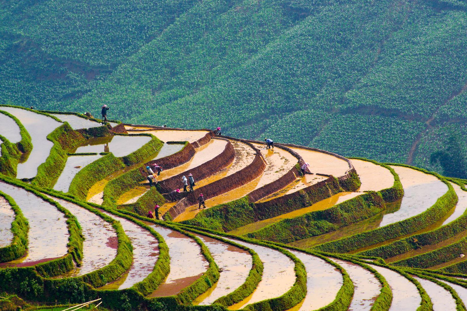 Nước về trên các ruộng bậc thang ở Sàng Ma Sáo (huyện Bát Xát - Lào Cai).