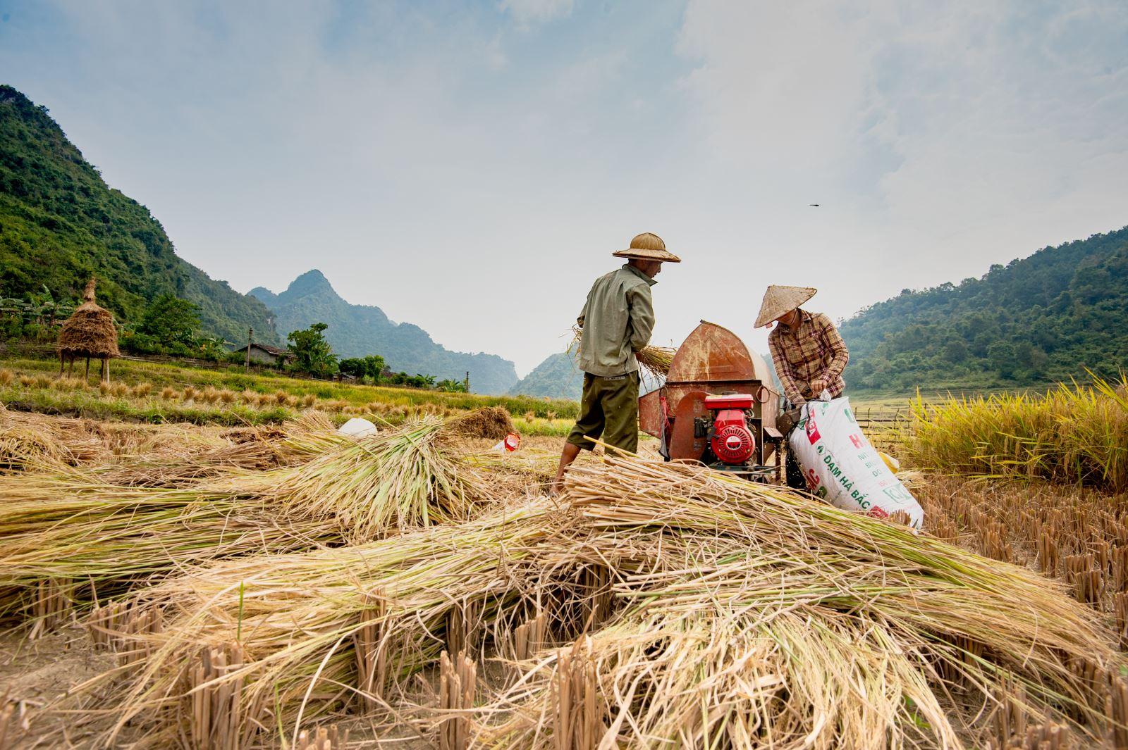 Có máy tuốt lúa, công việc đồng áng đã bớt nặng nhọc hơn trước.