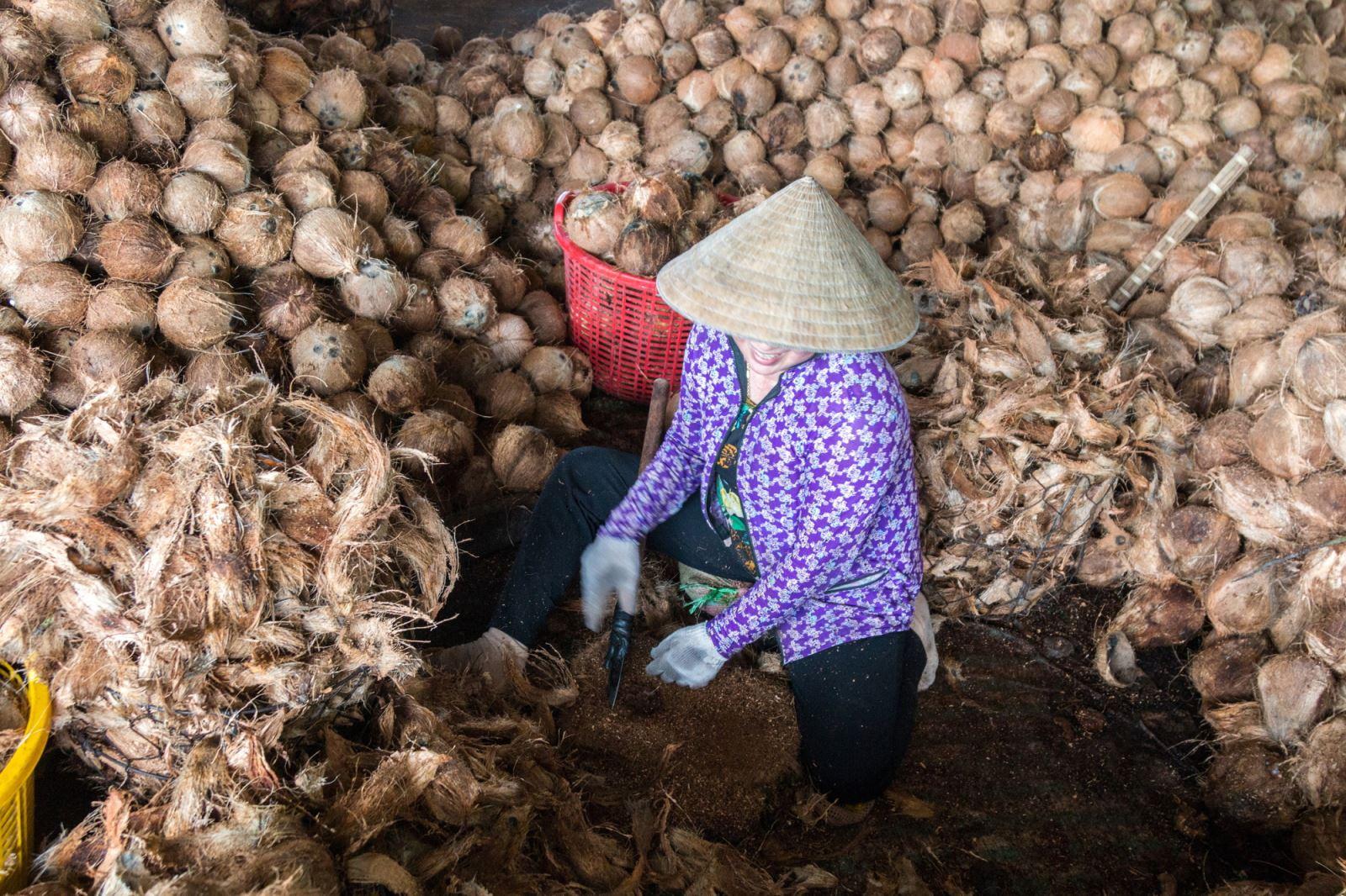 Chiết xơ dừa. (Xơ dừa được dùng làm nguyên liệu để sản xuất ra các mặt hàng như : lưới xơ dừa, chỉ xơ dừa, thảm xơ dừa…).