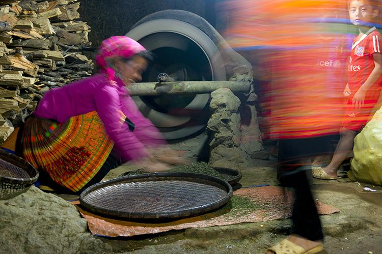 Lá tươi không bao giờ để qua đêm. Cứ tối tối là họ tập trung sao trà. Trước kia người H'Mông ở Tà Xùa sao trà bằng chảo nhưng giờ họ có lò củi và thùng quay. Có thể là quay tay hoặc động cơ điện.
