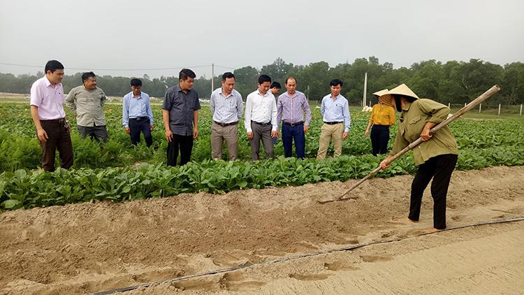 Lãnh đạo huyện Thạch Hà kiểm tra sản xuất trên cánh đồng 3ha - Ảnh Khắc Mai