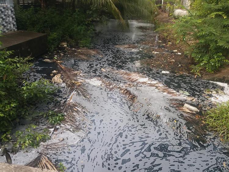 Kênh Bình Phong ô nhiễm trầm trọng.