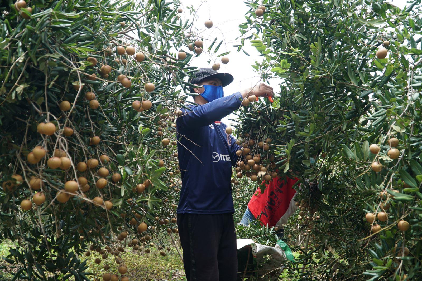 Việc thu mua nông sản đặc biệt là trái cây, rau xanh tại một số địa phương phía Nam hiện gặp một số trở ngại, xảy ra tình trạng ùn ứ một vài nơi.