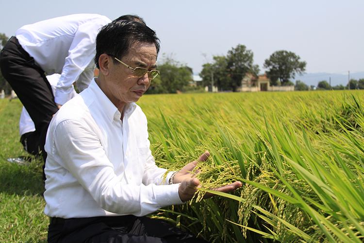 Với tài năng của mình, doanh nhân Trần Mạnh Báo đã đưa ThaiBinh Seed trở thành 1 trong 500 doanh nghiệp trong nước có tốc độ phát triển nhanh nhất.